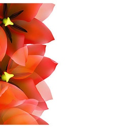 Red tulip border with water drops vector