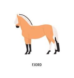 Fjord breed horse flat vector