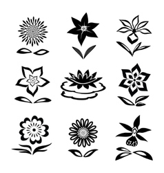 Flower set Chamomile lily orchid water-lily vector