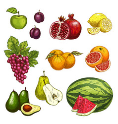fruit sketch of fresh sweet berry for food design vector image vector image