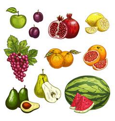 fruit sketch of fresh sweet berry for food design vector image