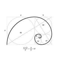 golden ratio proportion spiral section vector image