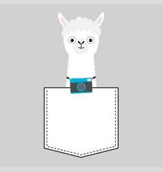 Llama alpaca face head in pocket photo camera vector