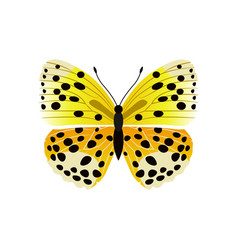 Lycaena butterfly yellow vector