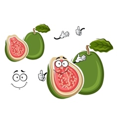 Tropical gren apple guava fruit cartoon character vector image