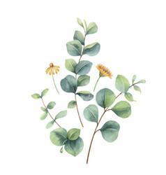 watercolor arrangement with eucalyptus vector image