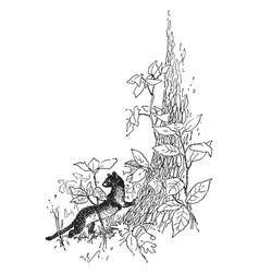 Weasel with leaves in this frame vintage engraving vector