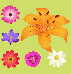 Yellow lily flower with smaller blossoms poster vector