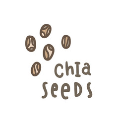 chia seeds superfood vector image vector image