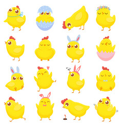 Easter chicks spring baby chicken cute yellow vector