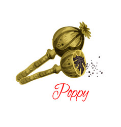 poppy seeds flavoring icon vector image