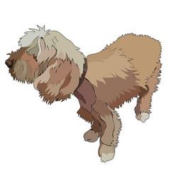 shaggy dog vector image
