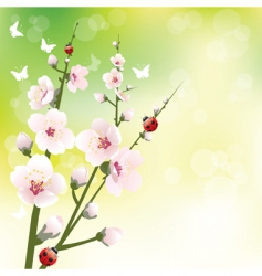 Spring blooming vector