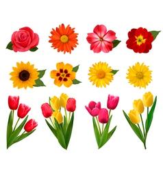 Set of beautiful flowers vector image