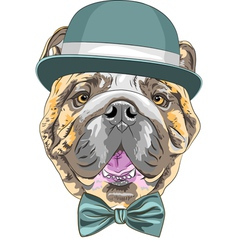 hipster dog English Bulldog breed vector image