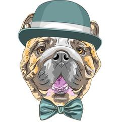 Hipster dog English Bulldog breed vector