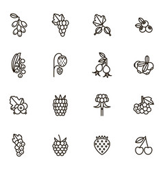 berries signs black thin line icon set vector image