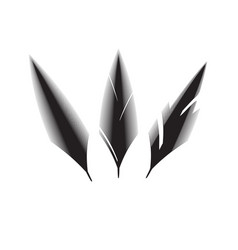 Birds feathers icon vector