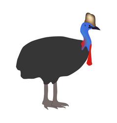 Casuarius bird vector