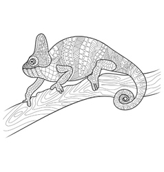 Chameleon animal coloring book for adults vector image