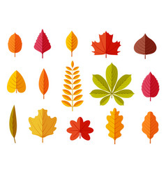 fall leaves colorful autumn leaves leaf chestnut vector image
