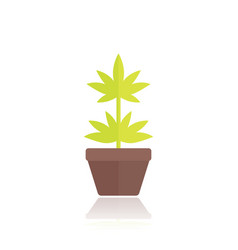 marijuana plant in pot icon in flat style vector image