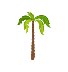 Palm tree with big bright green leaves and brown vector