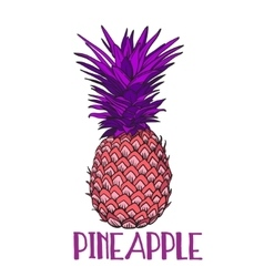 Pineapple tropical fruit object Health vector image