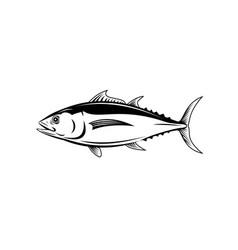 albacore thunnus alalunga or longfin tuna side vector image