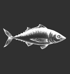 hand drawn tuna fish on chalk board vector image