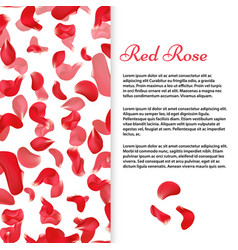 red rose petals banner or flyer template vector image