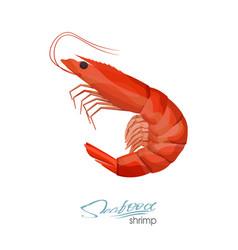 Shrimp in cartoon style vector