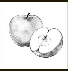 apple hand drawn vector image