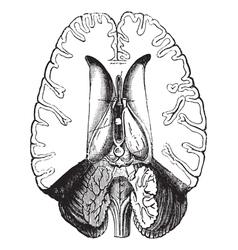 Human brain engraving vector image vector image