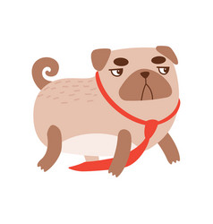 cute angry pug dog with red necktie funny vector image
