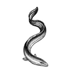 Ink sketch japanese eel vector