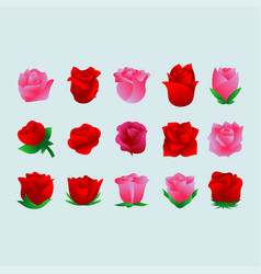 rose flower set vector image