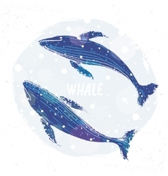 two blue whale vector image vector image