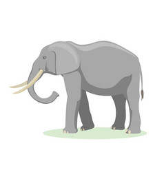 african elephant cartoon vector image