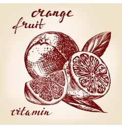 fruit orange set hand drawn llustration vector image