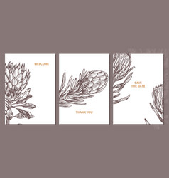 minimalistic trendy cards with protea flowers vector image