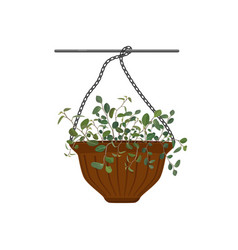 Pot hanging with potted flowers tradescantia vector