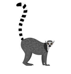 tropical lemur icon vector image
