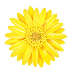 Yellow Gerber vector