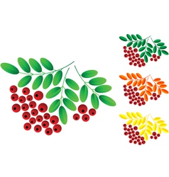 Ashberry vector