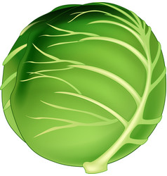 cabbage icon cartoon isolated vector image