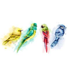 colorful tropic birds watercolor beautiful vector image