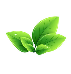eco green leaves abstract ecology vector image