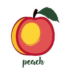Peach on white vector