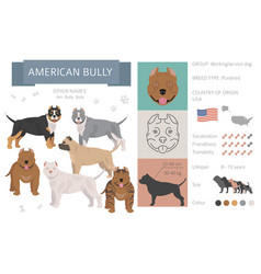 American bully dog isolated on white vector